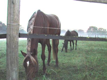 horses-in-morning-mist-2