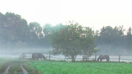 horses-in-morning-mist