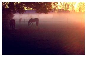 horses-in-morning-mist-29102010-2