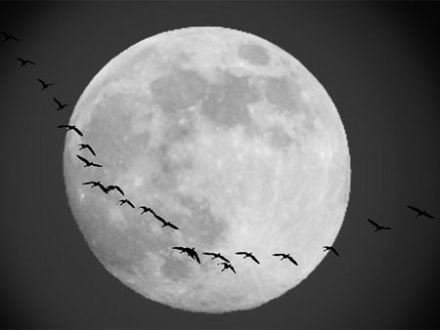moon-and-goose